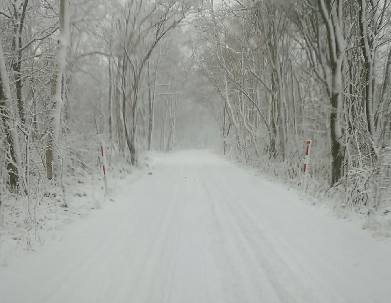 雪が降ります