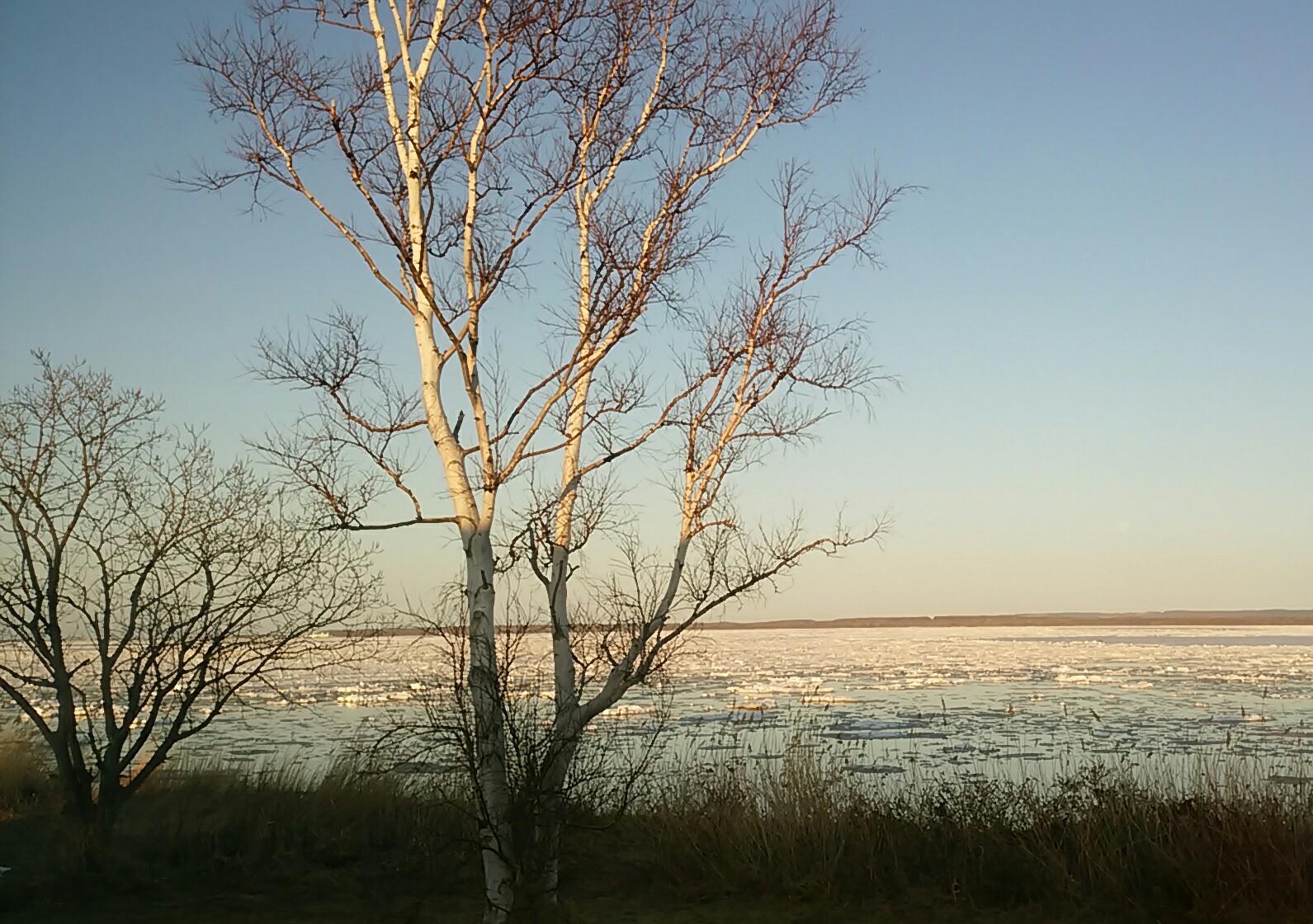 サロマ湖の氷